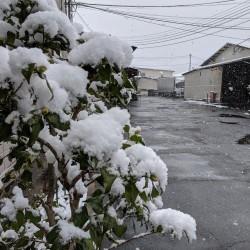 雪の華咲く丹波